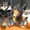 Customs Agents Get Electronic Control Over Wildlife Trade