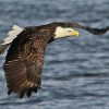 Climate Change Threatens North American Birds With Extinction