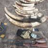 Six Elephant Poachers Caught in Mozambique Reserve