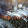 Rocky Mountain Forests Vanishing as Planet Heats Up