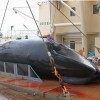 Japan Defies Whaling Commission, Vows to Resume Antarctic Hunt