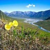 Obama Would Widen Wilderness in Arctic National Wildlife Refuge