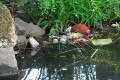 Baltimore Harbor, Patapsco River Must Be Cleared of Trash