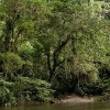 CO2 Speeds Tropical Forest Growth, Slowing Climate Change