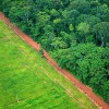 World's Forests at the Mercy of Commodity Supply Chains