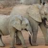 World Wildlife Day: Organized Crime Threat Growing
