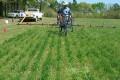 Common Herbicide Glyphosate a 'Probable Human Carcinogen'