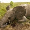 UN General Assembly Resolves to Combat Wildlife Trafficking