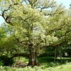 Tree of Life With 2.3 Million Species Open for Changes