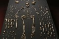 Human Ancestor, Homo naledi, Discovered in S. Africa