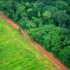 Greenpeace, Monsanto: Two Visions of Brazil's Forest Future