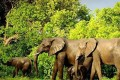 Malawi Gets Tough on Wildlife Crime At Home and Abroad