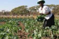 African Women in Agribusiness Resolve to Take Action