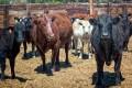 COP21 Forgot Farm Animals