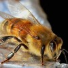 Ortho Bans Neonics, Bees Do Their Happy Dance