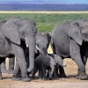Poaching of Elephant Matriarchs Destroys Rainforests
