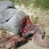 UNEP-INTERPOL Report: Environmental Crime on the Rise
