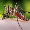 First U.S. Local Mosquito-borne Zika Virus Sickens Four