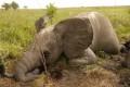 29 African Nations Urge EU to Halt Elephant Slaughter