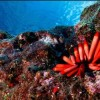 Obama Creates Planet's Largest Marine Protected Area