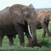 Legal Ivory Trade Rejected in Heated Debate