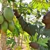 Africa Seeks 25 Million Climate Smart Farmers by 2025
