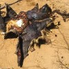 Mass Wildlife Poisoning in Limpopo National Park