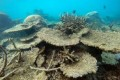 Coral Die-Off Devastates Great Barrier Reef
