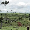 Brazil Vows to Restore Degraded Land