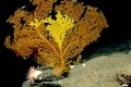 U.S. Creates Atlantic Deep-Sea Coral Protection Zone