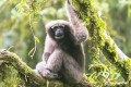 New Primate Species Found in China Already Endangered