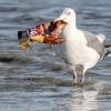 UN Campaigns to 'Turn the Tide' on Ocean Plastics