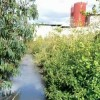 Israeli Illegal Pesticides Poison Occupied West Bank