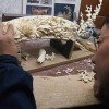 Hope for Elephants: China Starts Ivory Market Shutdown