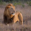 Fate of World's Wildlife Hangs on Sustainable Tourism