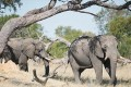 Poachers Poison Elephants in Zimbabwe National Park