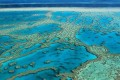 World's Largest Reef, Worth $56 Billion, Stressed Out