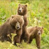Trump Takes Aim at Alaska Wildlife