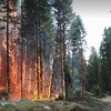 British Columbia Wildfires Force Thousands to Flee