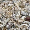 New York Crushes Tons of Elephant Ivory in Central Park