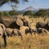 African Elephant Poaching Down, Ivory Seizures Up