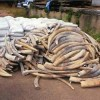 Brothers in Wildlife Crime Arrested in Malawi