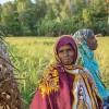 Greenpeace Seeks Viewers' Votes in Documentary Festival