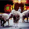 Ireland, India, Italy Ban Wild Animals in Circuses