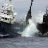 Sea Shepherd Backs Off Japanese Whaling Fight