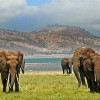 CITES Ignores Illegal Import of Wild Elephants by China