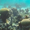 New Kind of Insurance Protects Coral Reefs at Risk