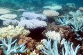 Climate Change Is Killing the Great Barrier Reef