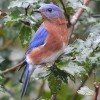 Trump Sued to Restore Migratory Bird Protections