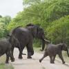 Tanzania Opens Pristine Reserve for Logging, Hydropower